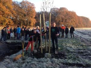 Maik Beermann pflanzt einen Baum